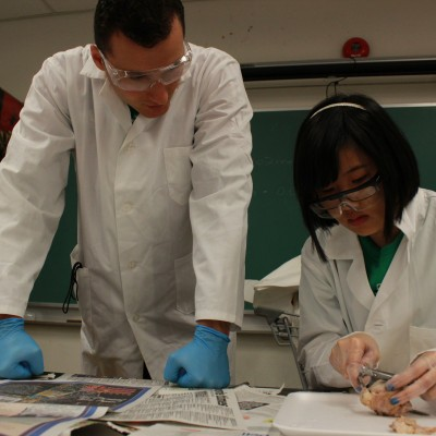 Instructors showing a dissection.