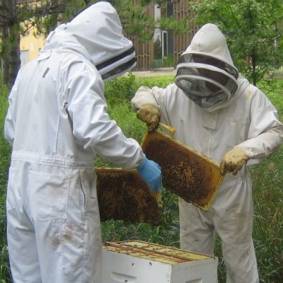 Two beekeepers at apiary
