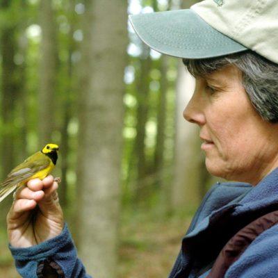bridget stutchbury holding a songbird